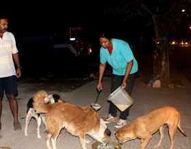 Helping Stray Dogs Animal